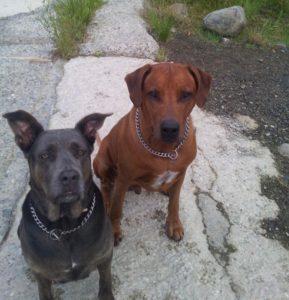 Azor and Xena
