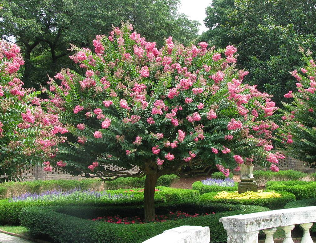 Lovely blossom tree in Spain